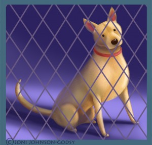 sitting-dakota-dog-fence-ver-three